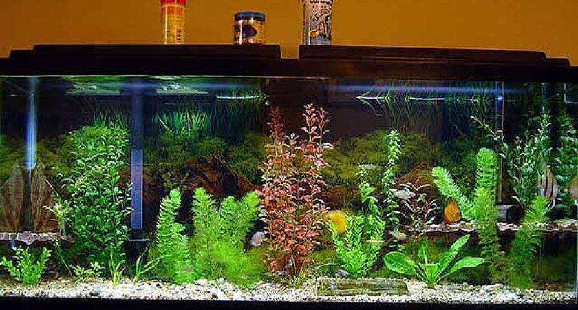 Images Ideas For Tropical Fish Tanks