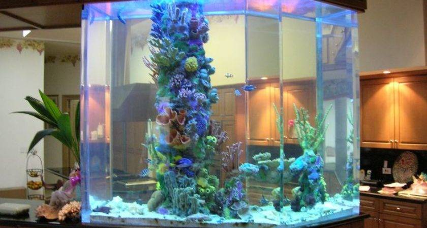 Charming Saltwater Fish Tank Ideas Remodel Home