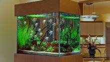 Exotic Interior Decoration Aquarium