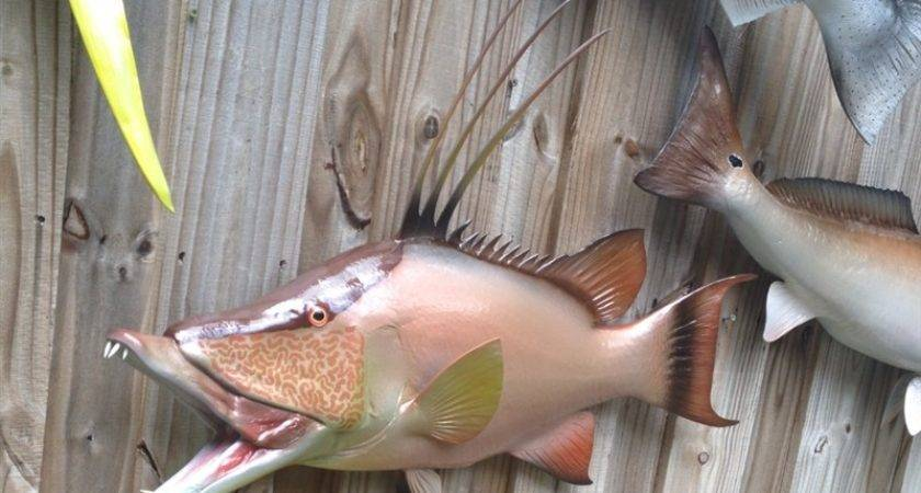 Hog Snapper Fish Mount Two Sided Wall Replica