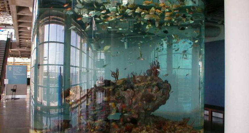 Indoor Architectural Cool Fish Tank Designs Ideas