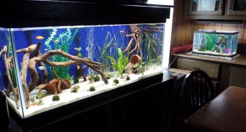 Let Photos Your Fish Rooms