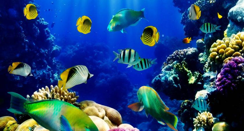 Live Fish New Style