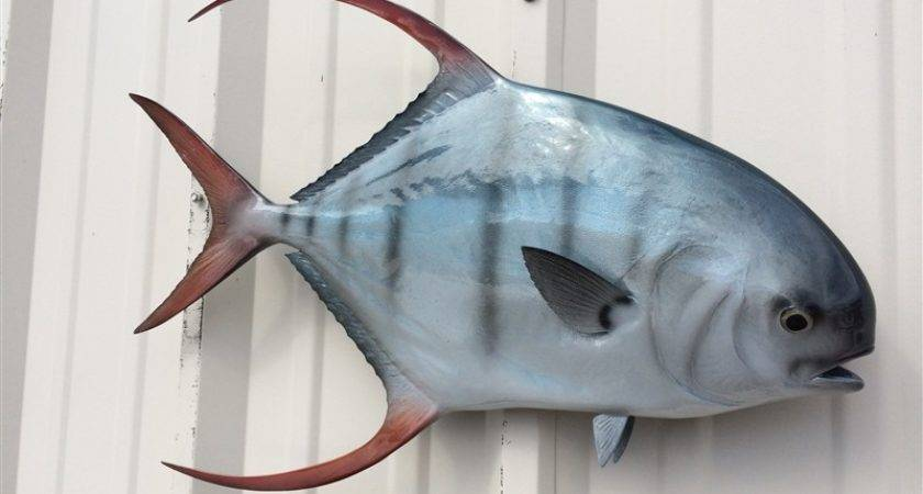 Palometa Fish Mount Two Sided Wall Replica