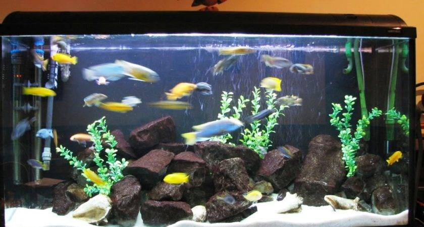 Tropical Fish Tank Decoration Ideas Awesome House